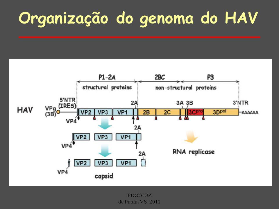 Organização do genoma do HAV FIOCRUZ de Paula, VS. 2011