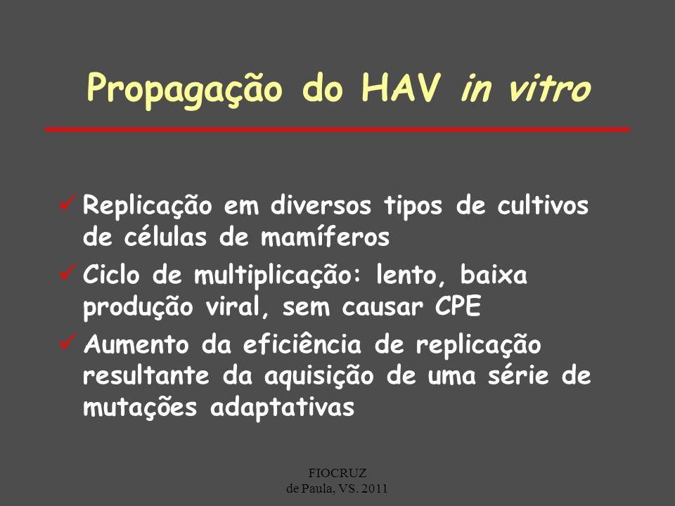 Propagação do HAV in vitro Replicação em diversos tipos de cultivos de células de mamíferos Ciclo de multiplicação: lento, baixa produção viral, sem c