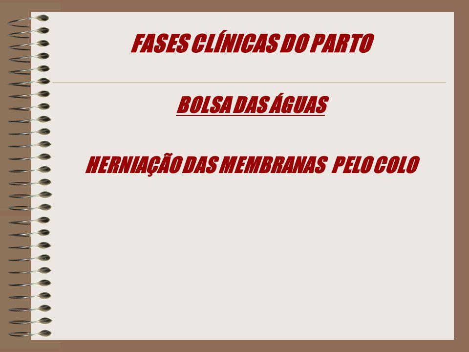 FASES CLÍNICAS DO PARTO BOLSA DAS ÁGUAS HERNIAÇÃO DAS MEMBRANAS PELO COLO