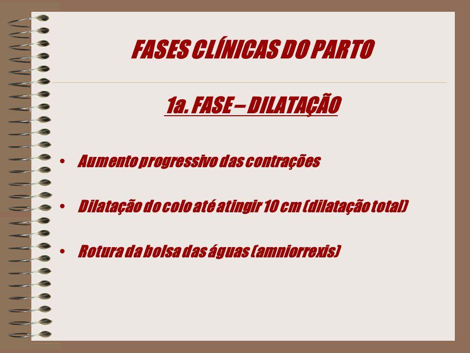 FASES CLÍNICAS DO PARTO 1a. FASE – DILATAÇÃO Aumento progressivo das contrações Dilatação do colo até atingir 10 cm (dilatação total) Rotura da bolsa