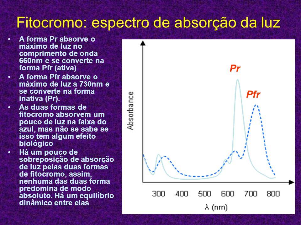 Fitocromo: espectro de absorção da luz A forma Pr absorve o máximo de luz no comprimento de onda 660nm e se converte na forma Pfr (ativa) A forma Pfr