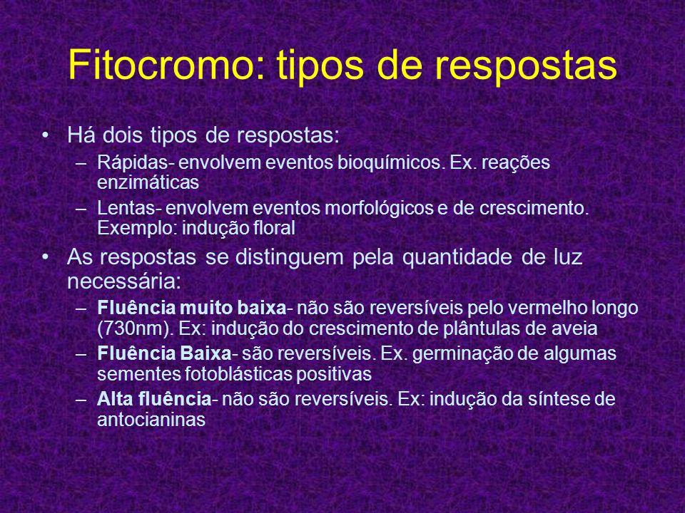 Fitocromo: tipos de respostas Há dois tipos de respostas: –Rápidas- envolvem eventos bioquímicos. Ex. reações enzimáticas –Lentas- envolvem eventos mo