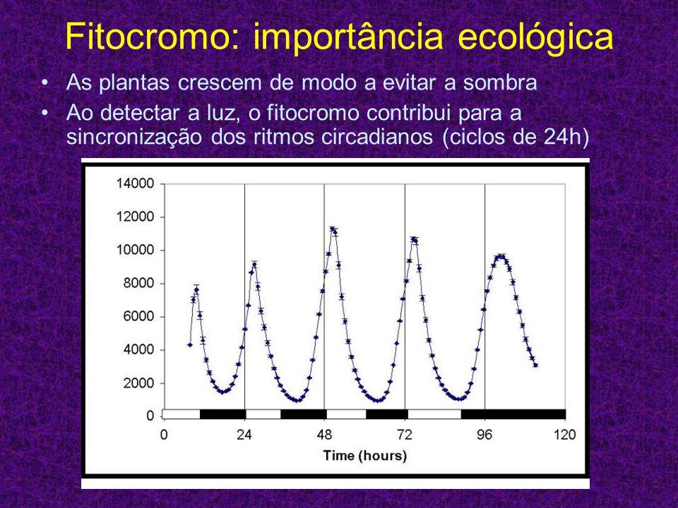 Fitocromo: importância ecológica As plantas crescem de modo a evitar a sombra Ao detectar a luz, o fitocromo contribui para a sincronização dos ritmos