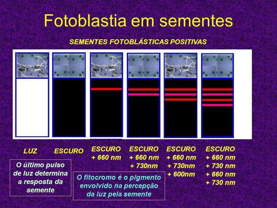 Fotoblastia em sementes ESCUROLUZ ESCURO + 660 nm ESCURO + 660 nm + 730nm ESCURO + 660 nm + 730nm + 600nm ESCURO + 660 nm + 730 nm + 660 nm + 730 nm S