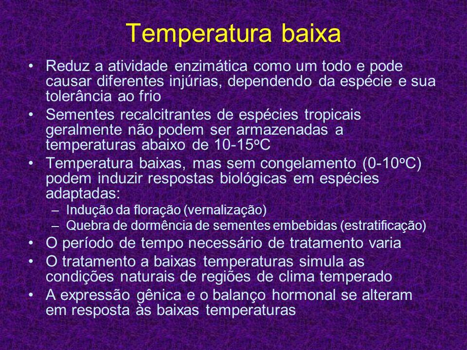 Temperatura baixa Reduz a atividade enzimática como um todo e pode causar diferentes injúrias, dependendo da espécie e sua tolerância ao frio Sementes
