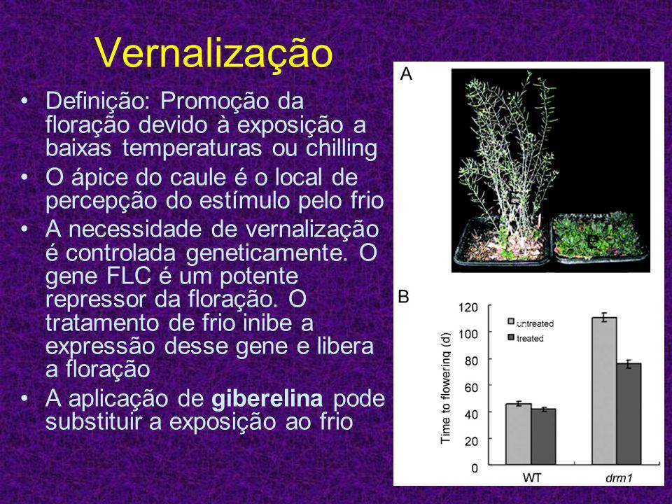 Vernalização Definição: Promoção da floração devido à exposição a baixas temperaturas ou chilling O ápice do caule é o local de percepção do estímulo
