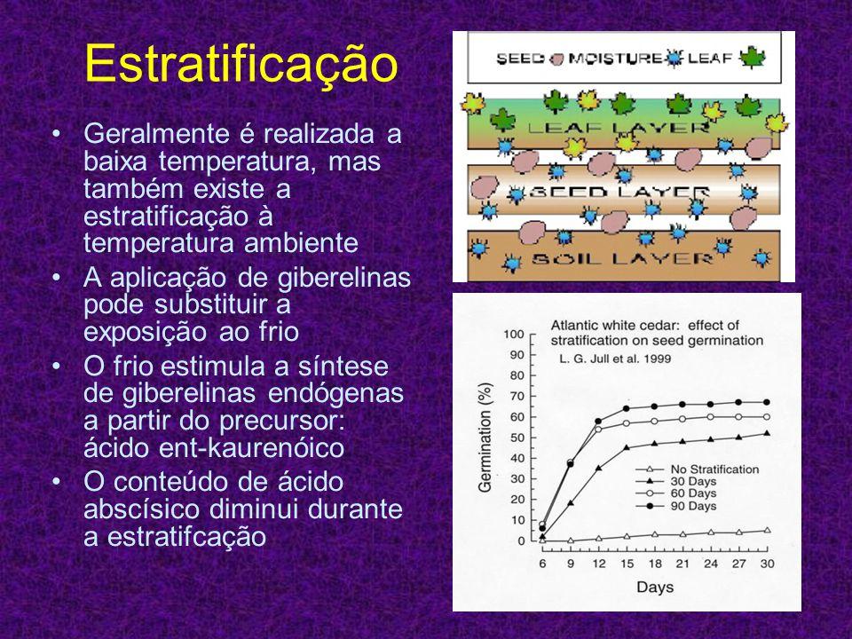 Estratificação Geralmente é realizada a baixa temperatura, mas também existe a estratificação à temperatura ambiente A aplicação de giberelinas pode s
