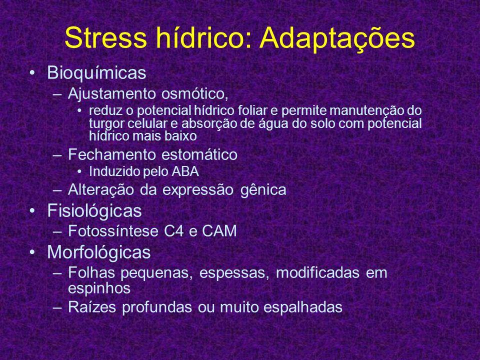 Stress hídrico: Adaptações Bioquímicas –Ajustamento osmótico, reduz o potencial hídrico foliar e permite manutenção do turgor celular e absorção de ág