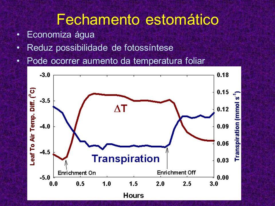 Fechamento estomático Economiza água Reduz possibilidade de fotossíntese Pode ocorrer aumento da temperatura foliar
