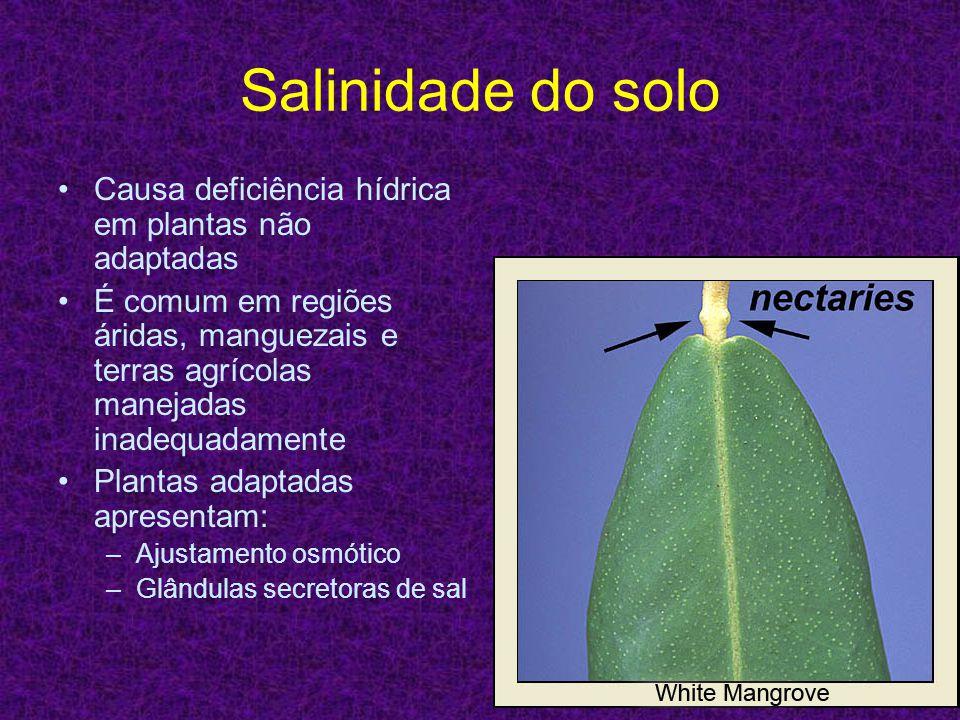 Salinidade do solo Causa deficiência hídrica em plantas não adaptadas É comum em regiões áridas, manguezais e terras agrícolas manejadas inadequadamen