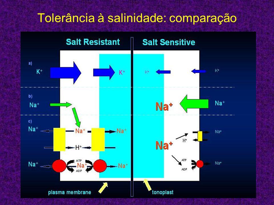 Tolerância à salinidade: comparação