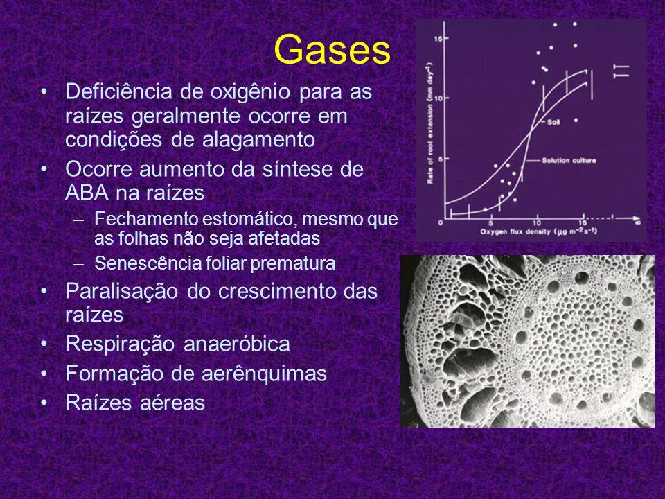 Gases Deficiência de oxigênio para as raízes geralmente ocorre em condições de alagamento Ocorre aumento da síntese de ABA na raízes –Fechamento estom