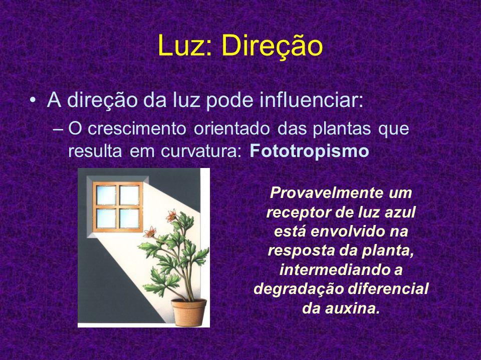 Luz: Direção A direção da luz pode influenciar: –O crescimento orientado das plantas que resulta em curvatura: Fototropismo Provavelmente um receptor