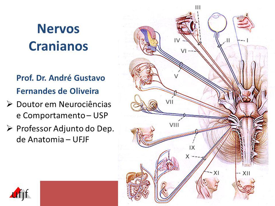 Nervos Cranianos Prof.Dr.