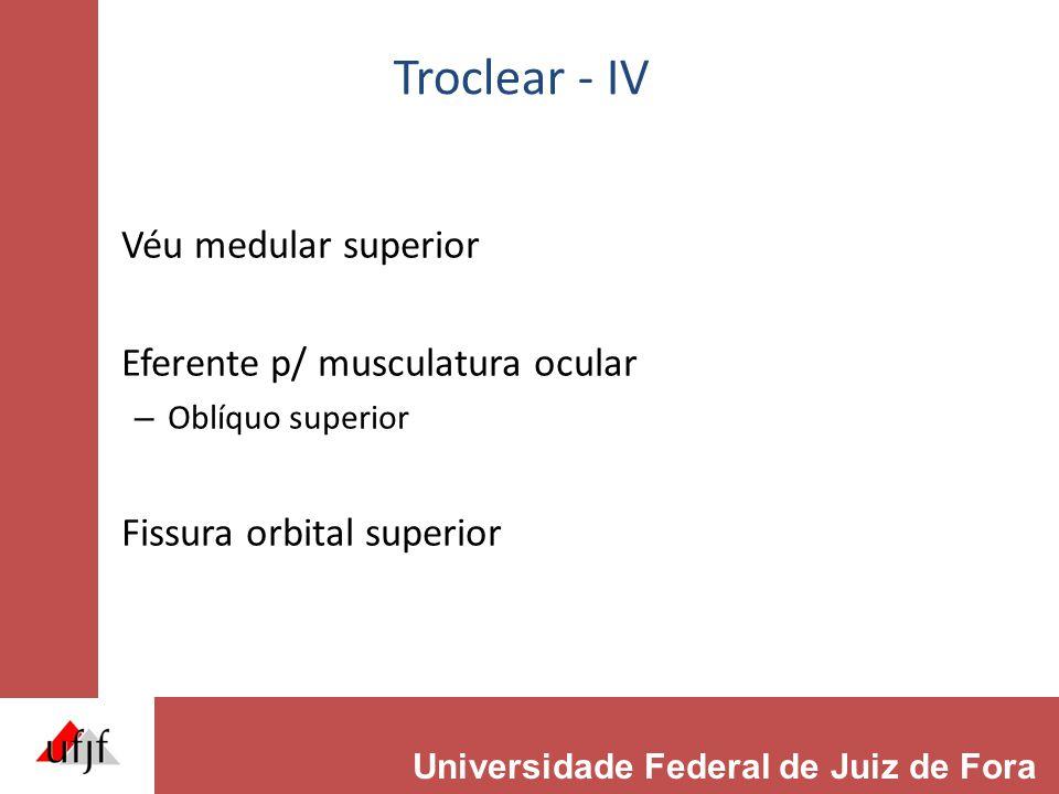 Troclear - IV Véu medular superior Eferente p/ musculatura ocular – Oblíquo superior Fissura orbital superior Universidade Federal de Juiz de Fora