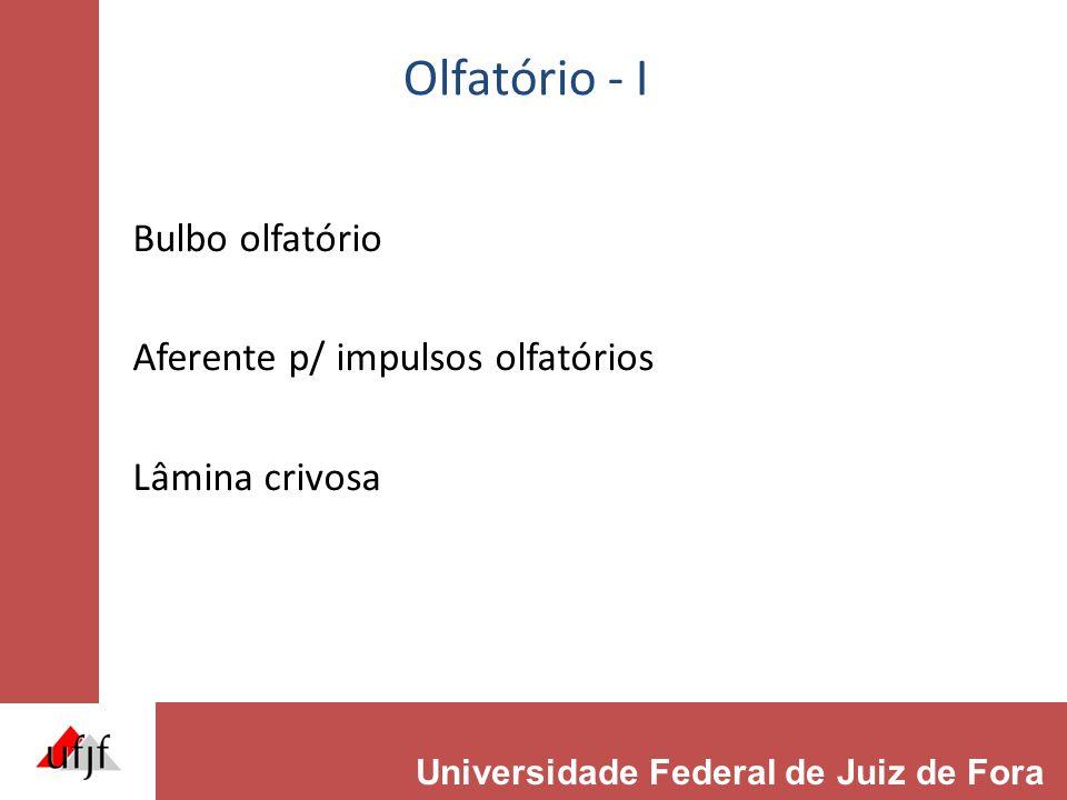 Olfatório - I Bulbo olfatório Aferente p/ impulsos olfatórios Lâmina crivosa Universidade Federal de Juiz de Fora