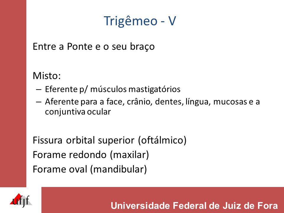 Trigêmeo - V Entre a Ponte e o seu braço Misto: – Eferente p/ músculos mastigatórios – Aferente para a face, crânio, dentes, língua, mucosas e a conju