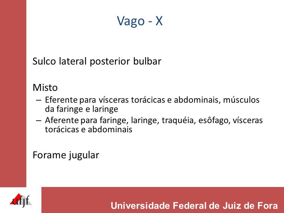 Vago - X Sulco lateral posterior bulbar Misto – Eferente para vísceras torácicas e abdominais, músculos da faringe e laringe – Aferente para faringe, laringe, traquéia, esôfago, vísceras torácicas e abdominais Forame jugular Universidade Federal de Juiz de Fora