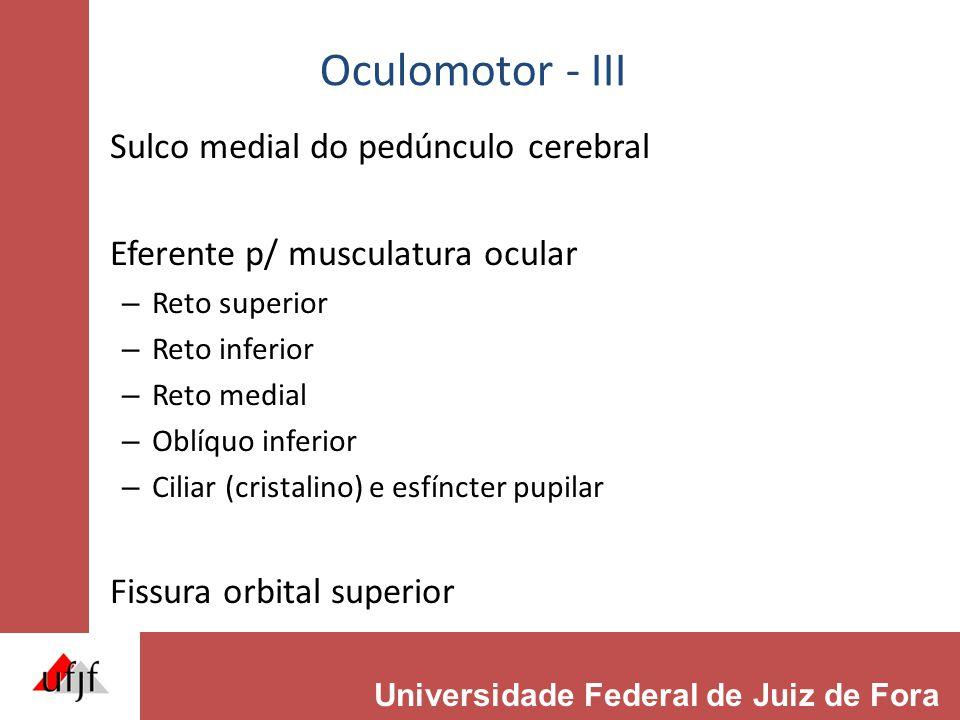 Oculomotor - III Sulco medial do pedúnculo cerebral Eferente p/ musculatura ocular – Reto superior – Reto inferior – Reto medial – Oblíquo inferior – Ciliar (cristalino) e esfíncter pupilar Fissura orbital superior Universidade Federal de Juiz de Fora