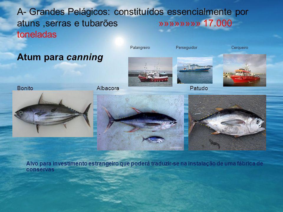 A- Grandes Pelágicos: constituídos essencialmente por atuns,serras e tubarões »»»»»»»» 17.000 toneladas Palangreiro Perseguidor Cerqueiro Atum para ca