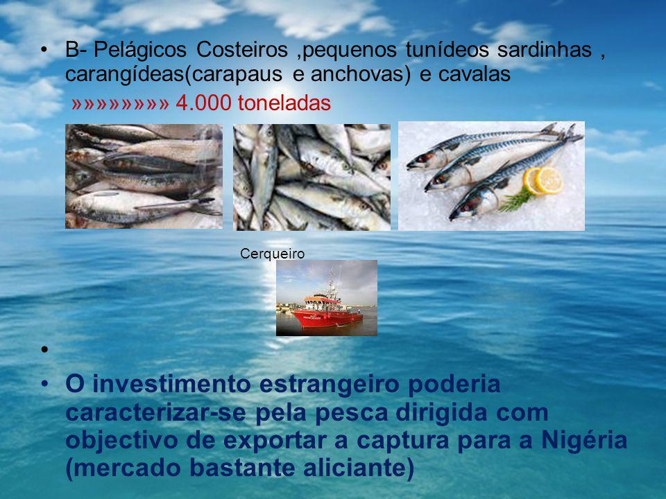 B- Pelágicos Costeiros,pequenos tunídeos sardinhas, carangídeas(carapaus e anchovas) e cavalas »»»»»»»» 4.000 toneladas Cerqueiro O investimento estra