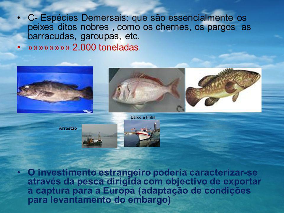 C- Espécies Demersais: que são essencialmente os peixes ditos nobres, como os chernes, os pargos as barracudas, garoupas, etc. »»»»»»»» 2.000 tonelada