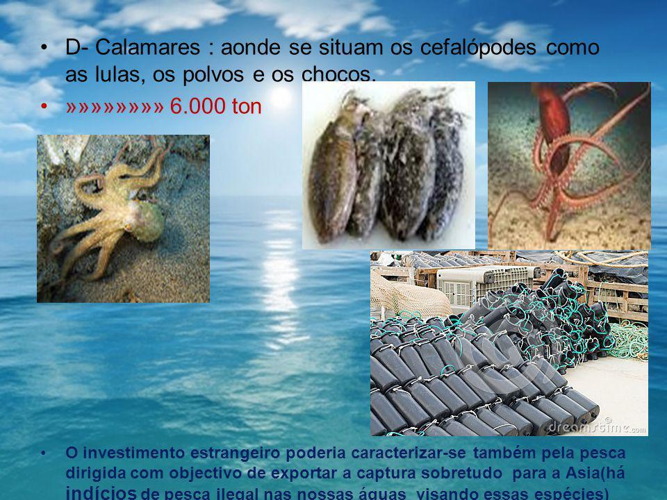 D- Calamares : aonde se situam os cefalópodes como as lulas, os polvos e os chocos. »»»»»»»» 6.000 ton O investimento estrangeiro poderia caracterizar