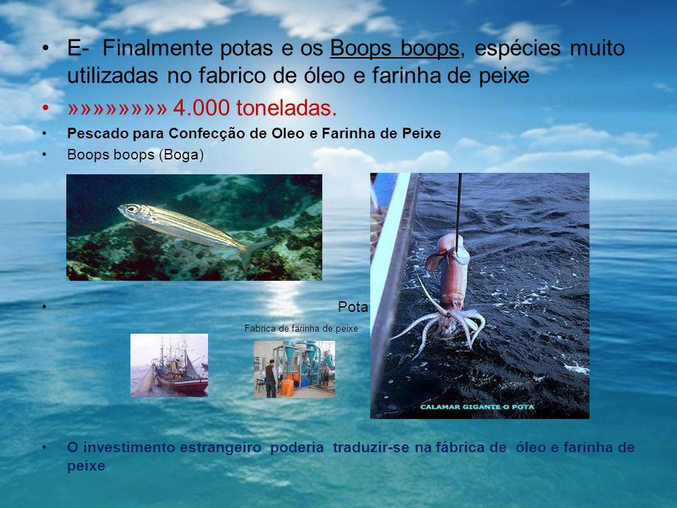 E- Finalmente potas e os Boops boops, espécies muito utilizadas no fabrico de óleo e farinha de peixe »»»»»»»» 4.000 toneladas. Pescado para Confecção