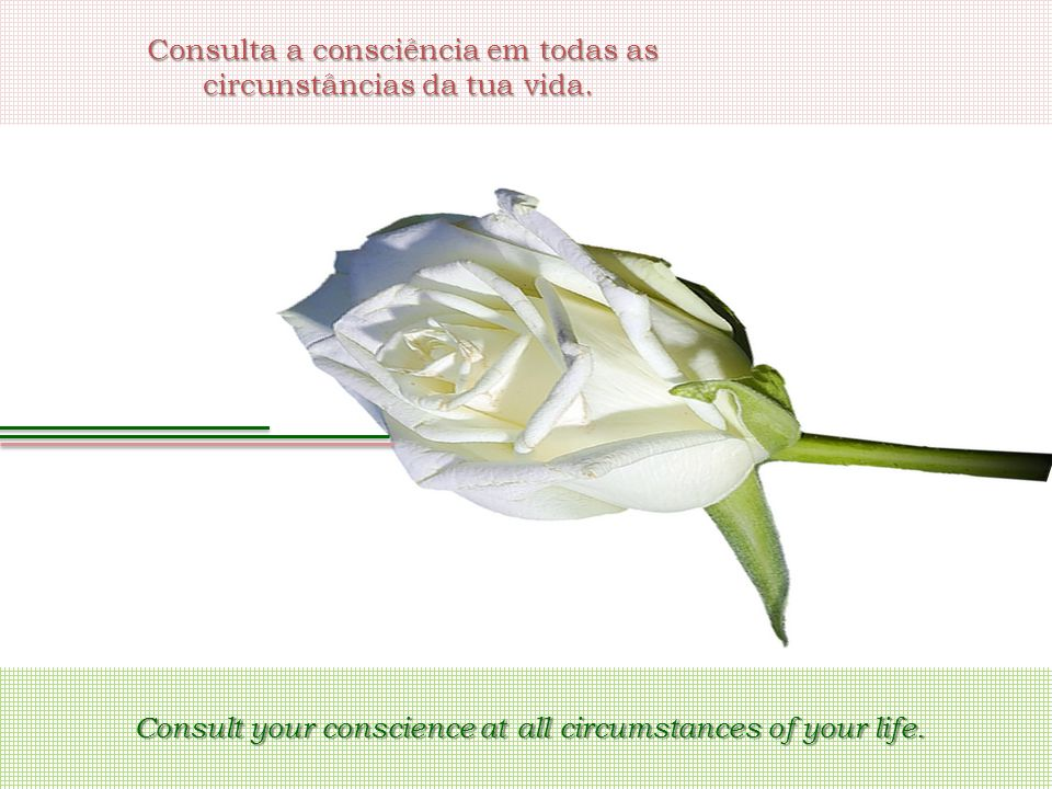 Consulta a consciência em todas as circunstâncias da tua vida.