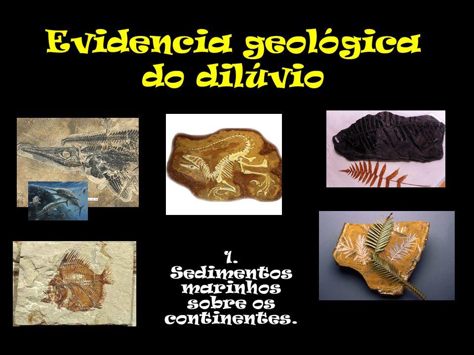 Evidencia geológica do dilúvio 1. Sedimentos marinhos sobre os continentes.