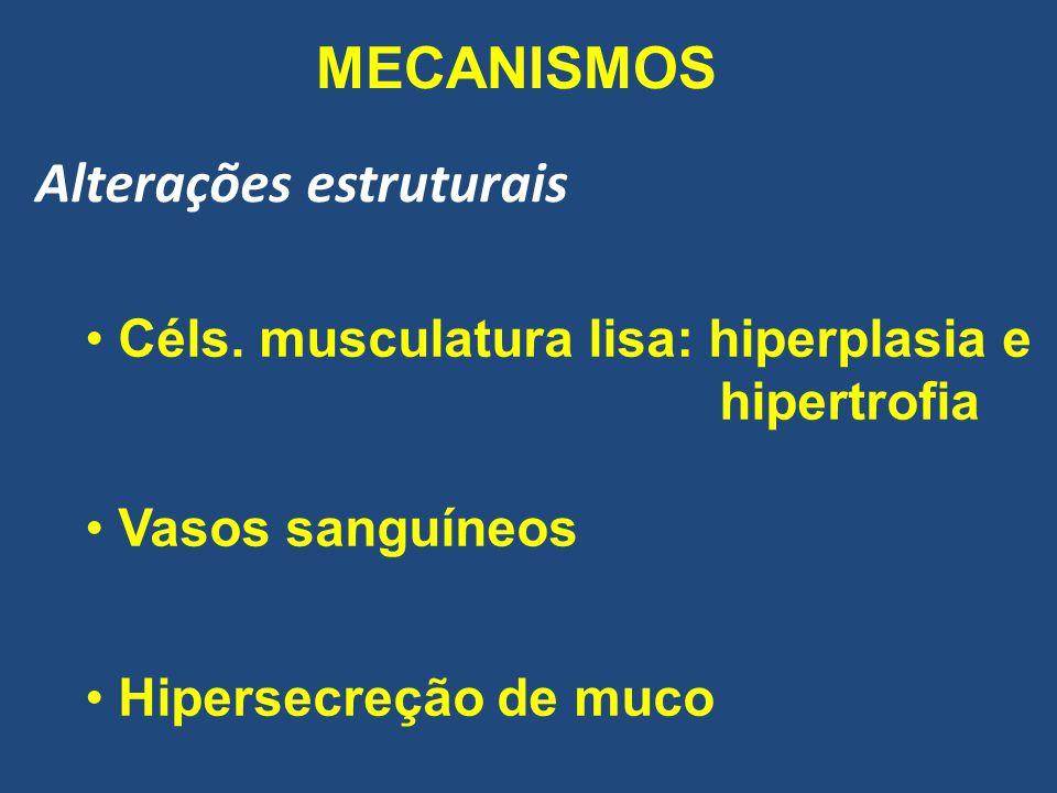 MECANISMOS Alterações estruturais Céls. musculatura lisa: hiperplasia e hipertrofia Vasos sanguíneos Hipersecreção de muco