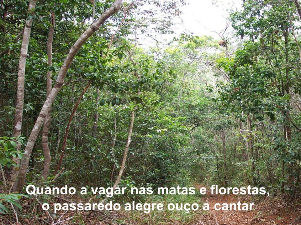 Quando a vagar nas matas e florestas, o passaredo alegre ouço a cantar