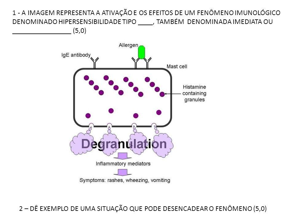 1 - A IMAGEM REPRESENTA A ATIVAÇÃO E OS EFEITOS DE UM FENÔMENO IMUNOLÓGICO DENOMINADO HIPERSENSIBILIDADE TIPO ____, TAMBÉM DENOMINADA IMEDIATA OU ____