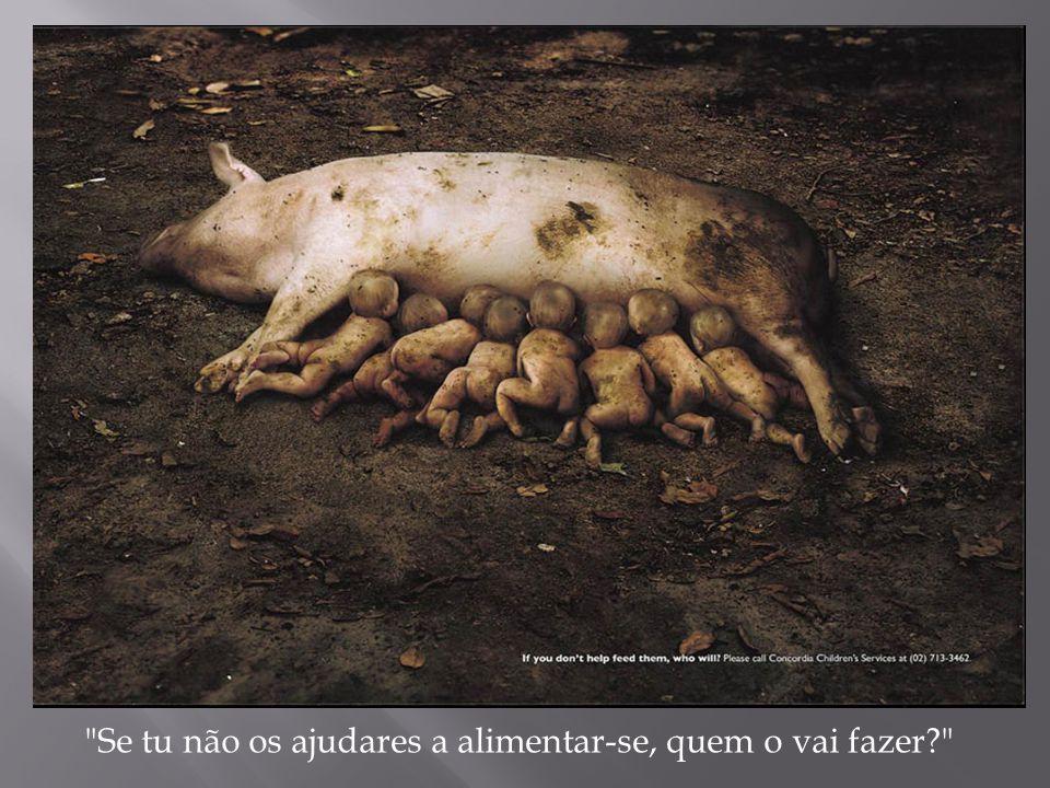 """""""Não compres recordações de animais exóticos"""
