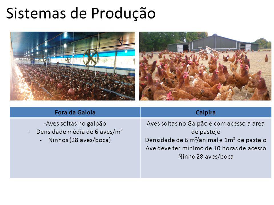 Sistemas de Produção Fora da GaiolaCaipira -Aves soltas no galpão -Densidade média de 6 aves/m² -Ninhos (28 aves/boca) Aves soltas no Galpão e com ace