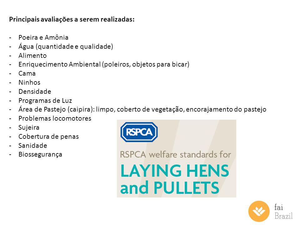 Principais avaliações a serem realizadas: -Poeira e Amônia -Água (quantidade e qualidade) -Alimento -Enriquecimento Ambiental (poleiros, objetos para