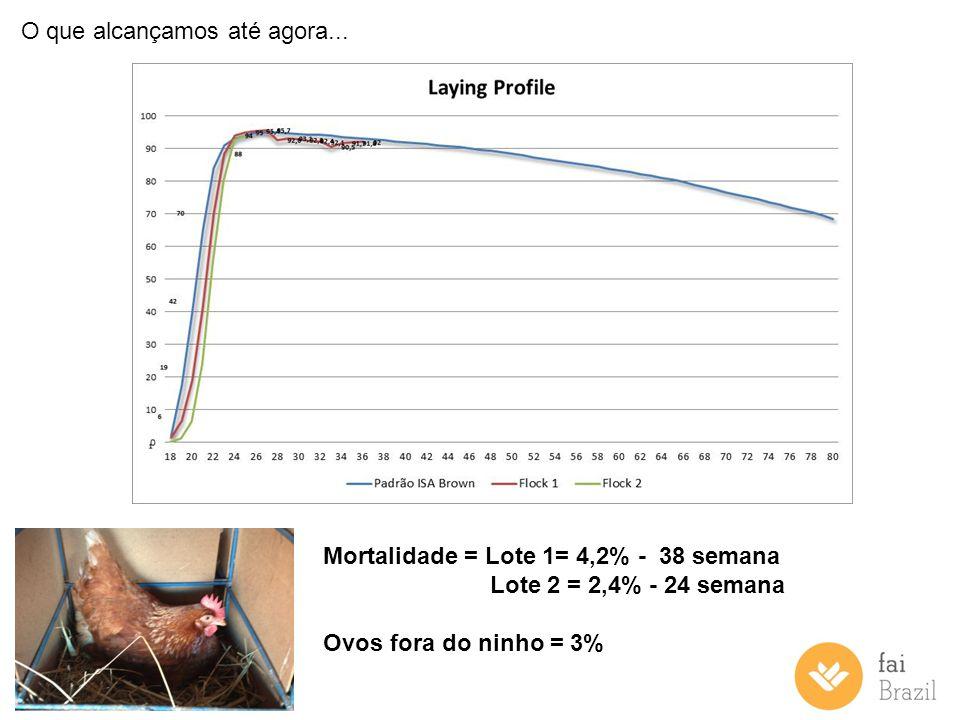O que alcançamos até agora... Mortalidade = Lote 1= 4,2% - 38 semana Lote 2 = 2,4% - 24 semana Ovos fora do ninho = 3%