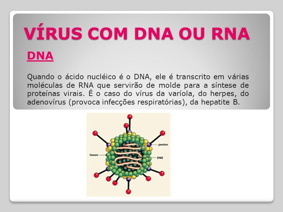 VÍRUS COM DNA OU RNA DNA Quando o ácido nucléico é o DNA, ele é transcrito em várias moléculas de RNA que servirão de molde para a síntese de proteína