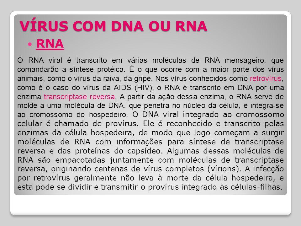 VÍRUS COM DNA OU RNA RNA O RNA viral é transcrito em várias moléculas de RNA mensageiro, que comandarão a síntese protéica. É o que ocorre com a maior