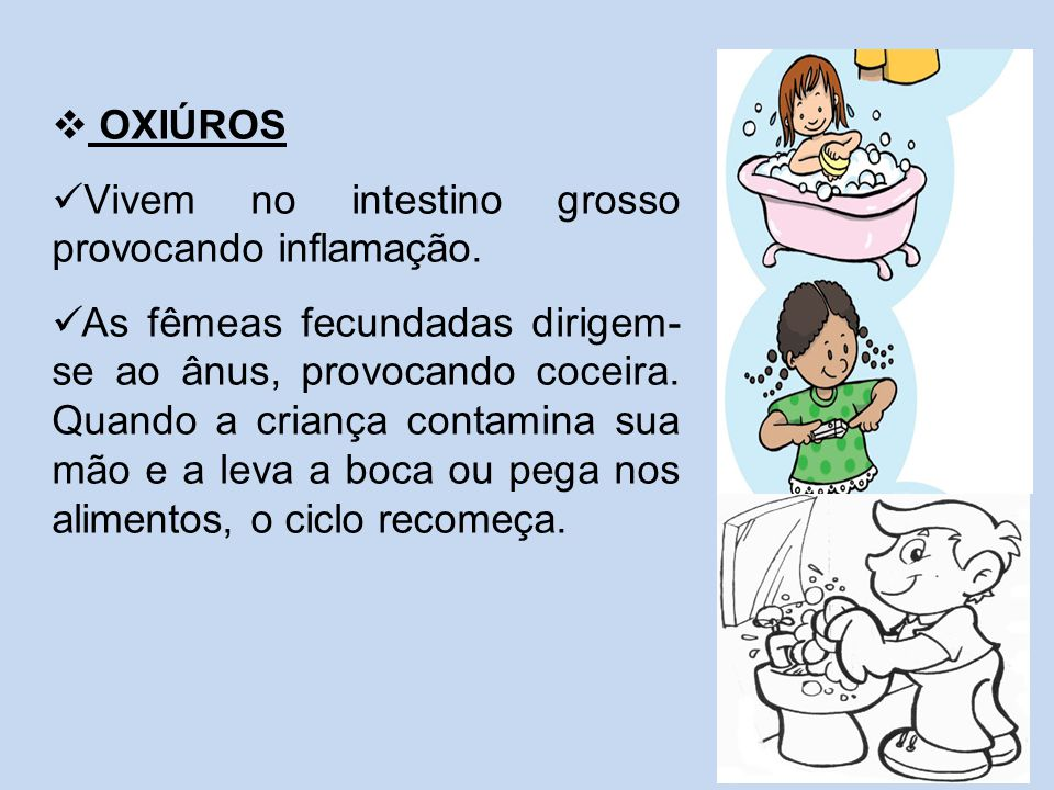  OXIÚROS Vivem no intestino grosso provocando inflamação. As fêmeas fecundadas dirigem- se ao ânus, provocando coceira. Quando a criança contamina su