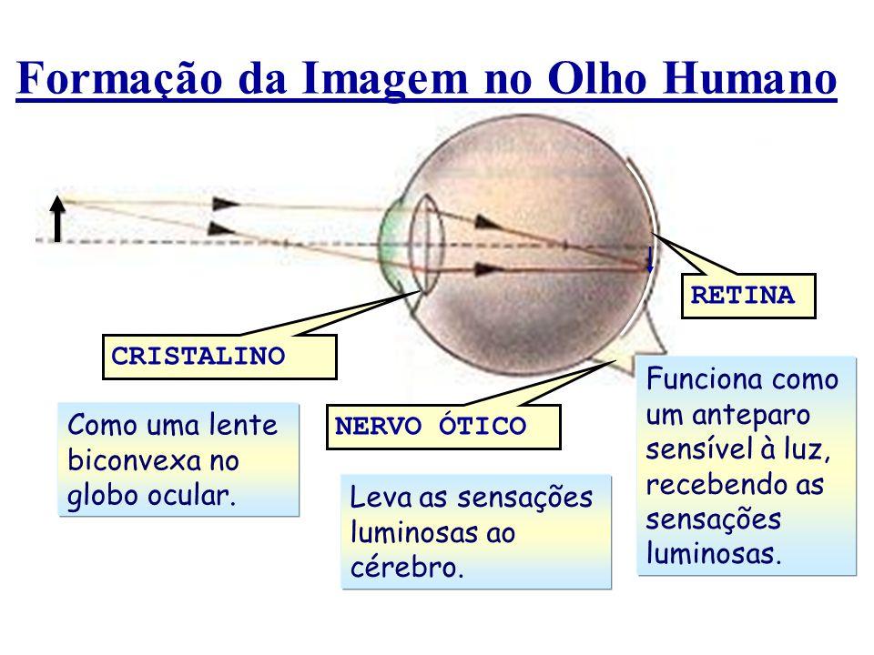 Formação da Imagem no Olho Humano CRISTALINO NERVO ÓTICO RETINA Como uma lente biconvexa no globo ocular. Leva as sensações luminosas ao cérebro. Func