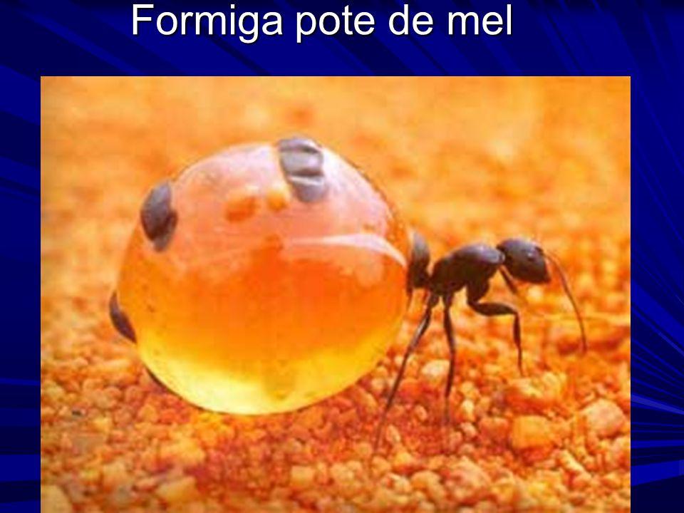 Formiga pote de mel