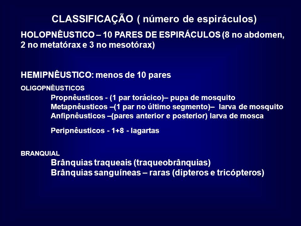 CLASSIFICAÇÃO ( número de espiráculos) HOLOPNÊUSTICO – 10 PARES DE ESPIRÁCULOS (8 no abdomen, 2 no metatórax e 3 no mesotórax) HEMIPNÊUSTICO: menos de