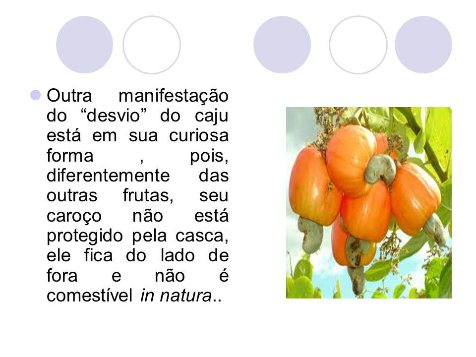 """Outra manifestação do """"desvio"""" do caju está em sua curiosa forma, pois, diferentemente das outras frutas, seu caroço não está protegido pela casca, el"""