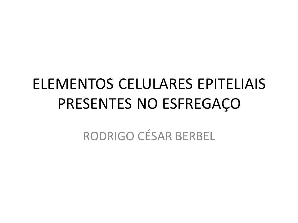 ELEMENTOS CELULARES EPITELIAIS PRESENTES NO ESFREGAÇO RODRIGO CÉSAR BERBEL