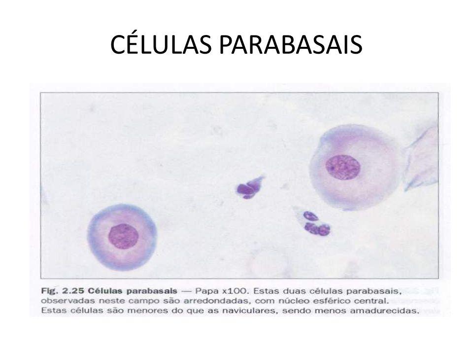 CÉLULAS PARABASAIS