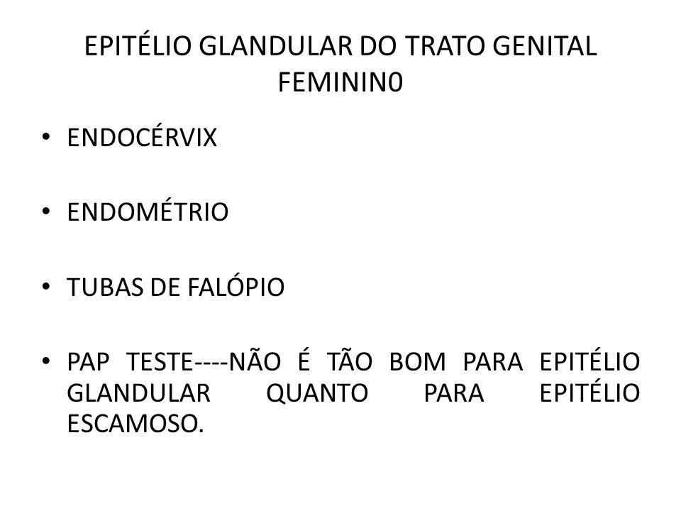 EPITÉLIO GLANDULAR DO TRATO GENITAL FEMININ0 ENDOCÉRVIX ENDOMÉTRIO TUBAS DE FALÓPIO PAP TESTE----NÃO É TÃO BOM PARA EPITÉLIO GLANDULAR QUANTO PARA EPITÉLIO ESCAMOSO.