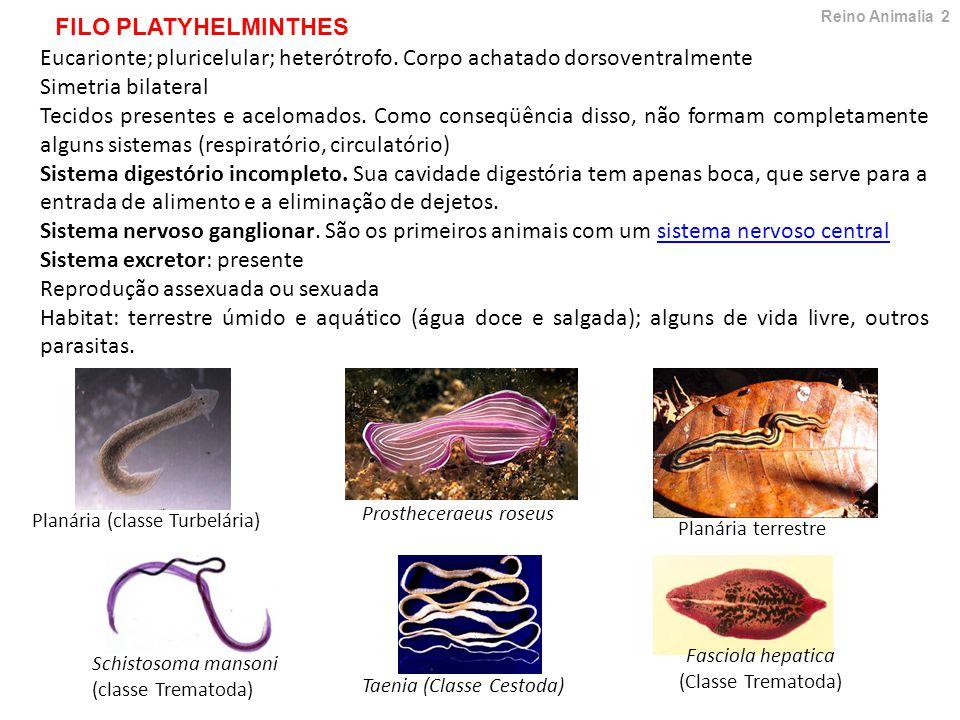 Eucarionte; pluricelular; heterótrofo.