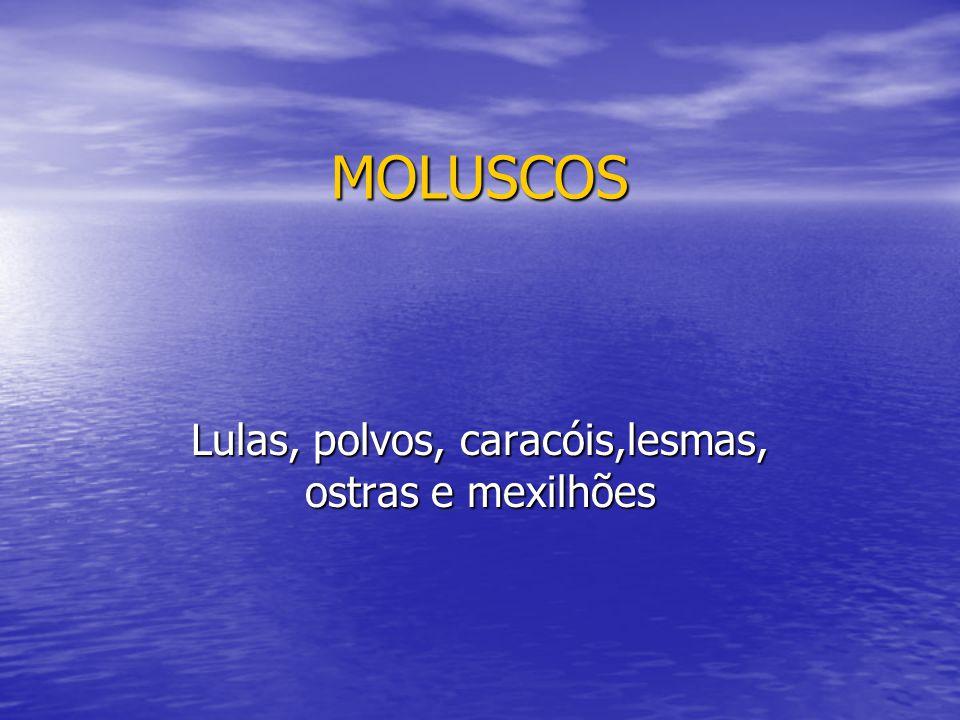 MOLUSCOS Lulas, polvos, caracóis,lesmas, ostras e mexilhões
