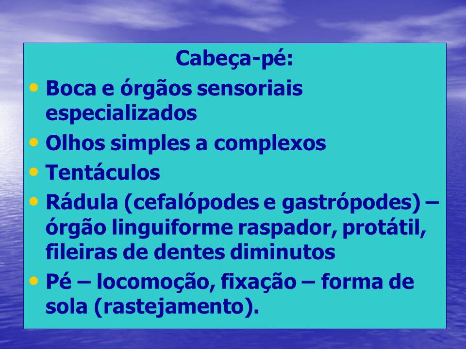 Cabeça-pé: Boca e órgãos sensoriais especializados Olhos simples a complexos Tentáculos Rádula (cefalópodes e gastrópodes) – órgão linguiforme raspado